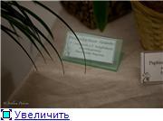 Выставка орхидей в Государственном биологическом музее им. К.А.Тимирязева 3c3a0c386666t