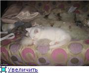 Фоксины Хендмейдики 3867afcdca67t