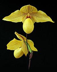 Обсуждение Орчидинна (Orchid Inn., USA) 6ffaee425bbb