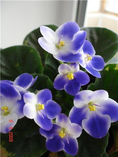 Valeska Blue 851979e84e23
