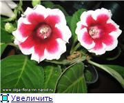 Выращивание глоксиний из семян E5af98279586t