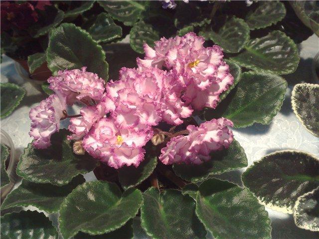 «Цветы.Ландшафт и Приусадебное хозяйство Весна - 2010» 5ab53364ec19