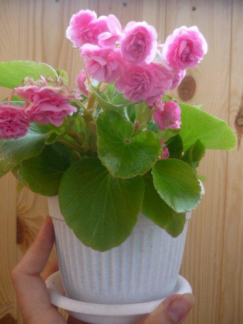 Мои любимые цветочки - Страница 39 574662e05586
