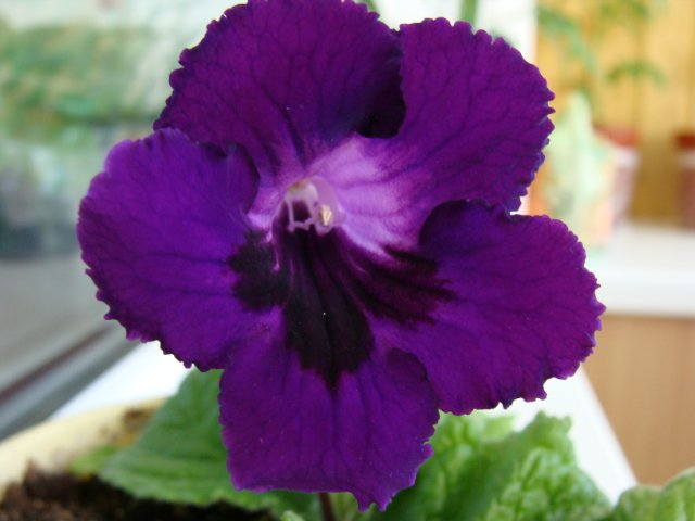 Мои цветочки - Страница 2 Cc45628939ea