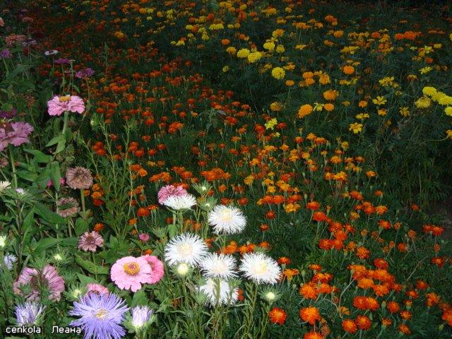Разводите ли дома цветы и какие? - Страница 27 840207d340c7
