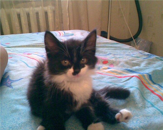 Хочу похвалиться котятами 9aaeb0e7be8c