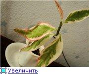 мой райский сад:) B3946bc18a4ct