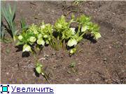 Весна идёт... 6bbb3216333ft