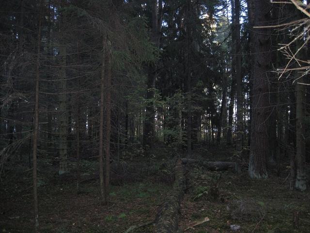 За грибами в Конаково (Тверская область, Волга)! 4daefbd21916