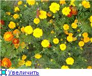 Наши домашние растения - Страница 2 6ad46a9b6dabt