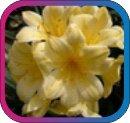 продам семена экзотических растений - Страница 3 1e6278499a59