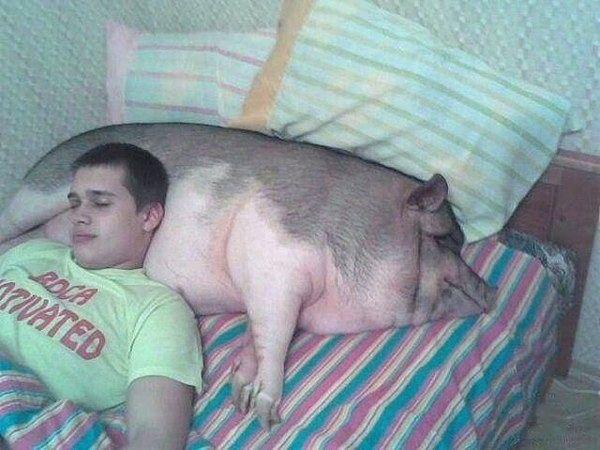 Миниатюрные свинки) - Страница 2 24274701d081