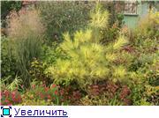 Cад Людмилы Ивановой из черкасс D38a04780edet