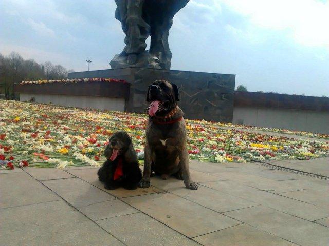 Наши собаки, друзья и гости, кот Мензурка - Страница 32 7ed86574ac5c