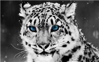 Животные Bcf193226c83