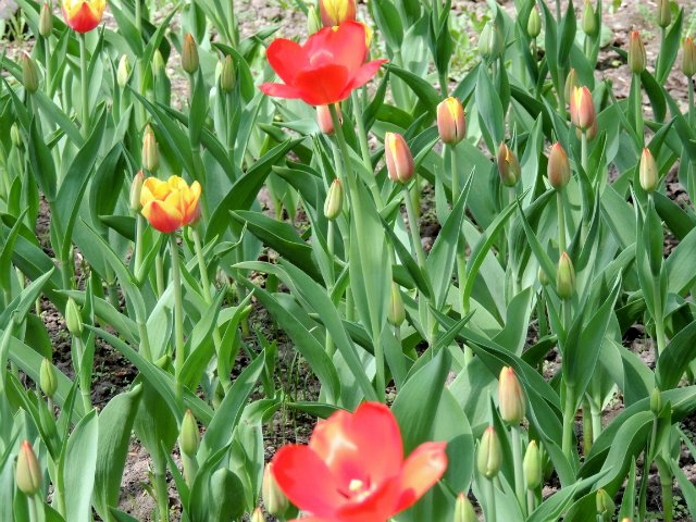 Фотографии цветов и деревьев D6635ba48e33