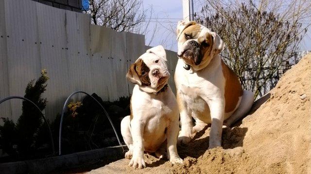 Собаки питомника Carpen Diaz - Страница 2 B54816f80bdd