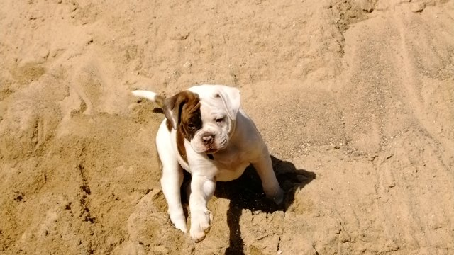Собаки питомника Carpen Diaz - Страница 2 5e1ada70251c