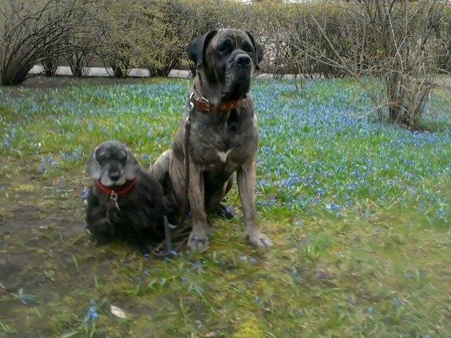 Наши собаки, друзья и гости, кот Мензурка - Страница 30 269763f6789b