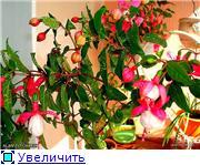 ФУКСИИ В ХАБАРОВСКЕ  - Страница 2 F19015399a12t