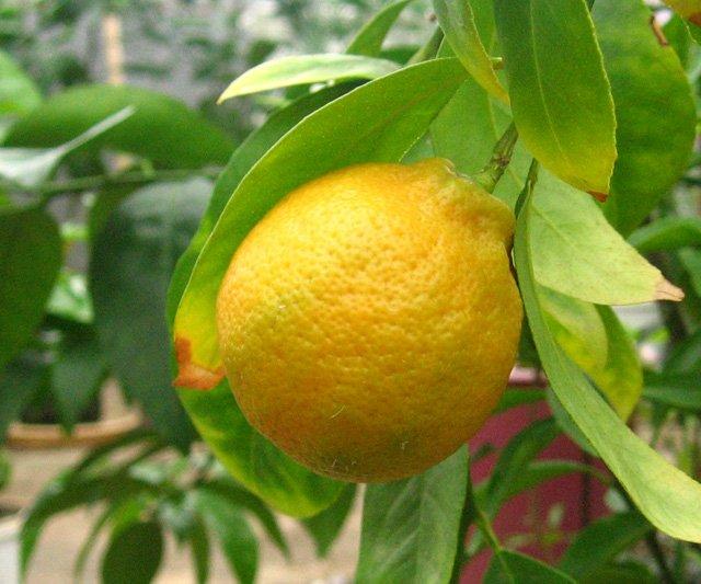 Растения из Нижегородской оранжереи 5fae0998c89b