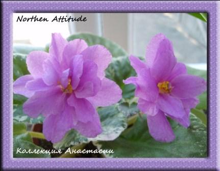Northern Attitude - Страница 2 D162914e402e