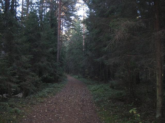 За грибами в Конаково (Тверская область, Волга)! Eb8c7733769b