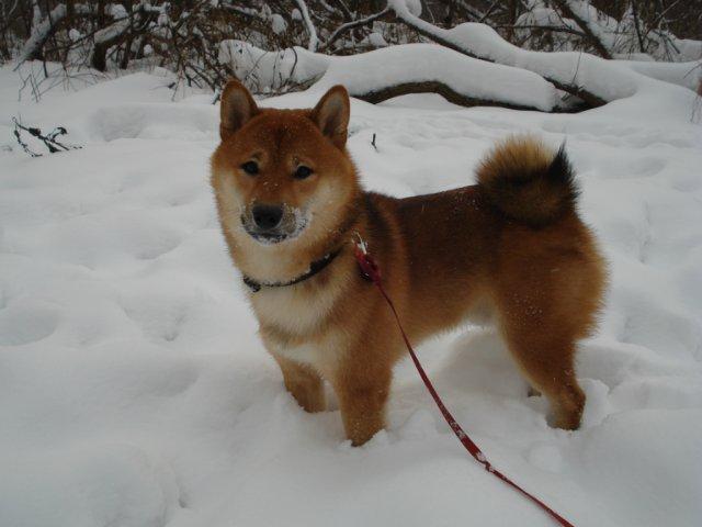 Вес щенка - Страница 6 9bfe2fb9cc3c