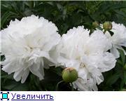 Лето в наших садах - Страница 2 D1db905b90d0t