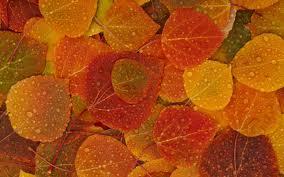 Ода Осени - Страница 2 4a7df150b3b0