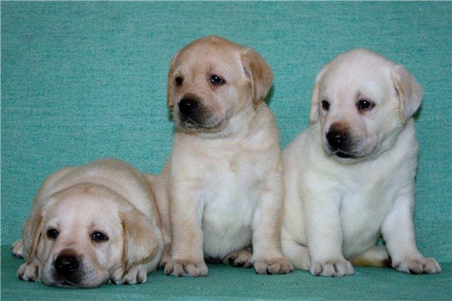 Наши щенки - Страница 6 F487e978c78b