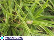 Cад Людмилы Ивановой из черкасс Efcc689e12f3t
