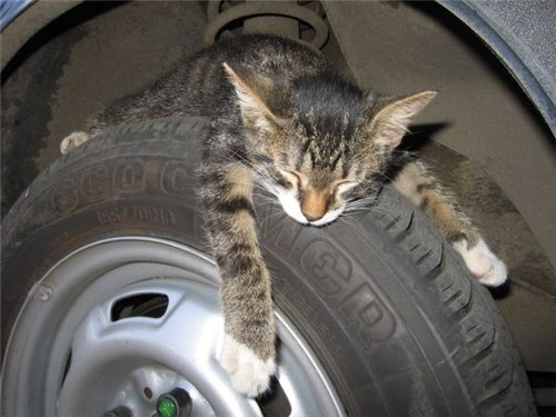 Фотографии кошек 123ace8d01d2
