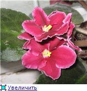наши домашние цветники - Страница 2 E77ade0f85f5t