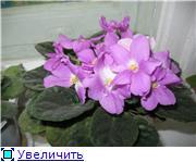 наши домашние цветники - Страница 2 0bbf1c1bfc1et