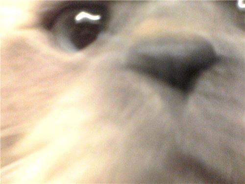 Наши домашние животные 7cbe3d8fe564