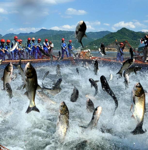 Озеро Циндаоху.Летающие рыбы Af5bec121960