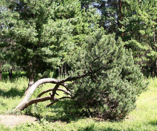 Экскурсия по Ботаническому Саду F48b01c7e671