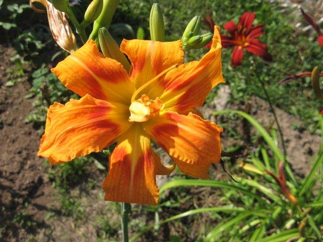 Во саду ли, в огороде... - Страница 6 022ee6ad6ab6
