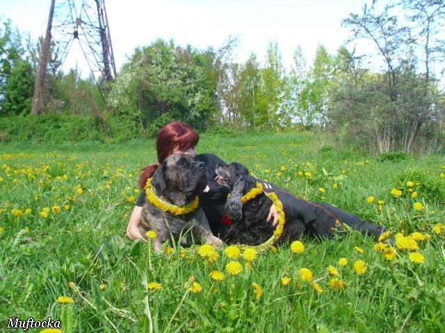 Собаки Татьяны Моисеенковой, кот Мензурка - Страница 4 F9d1646aba8d