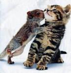 Забавные животные - Страница 5 7ed61db41cc6
