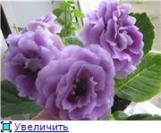 Семена глоксиний и стрептокарпусов почтой - Страница 7 2575f843b5f8t
