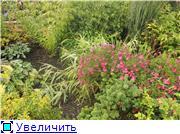 Cад Людмилы Ивановой из черкасс E707226c85edt