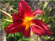 Мои цветулечки - Страница 21 1d732041ab3ft