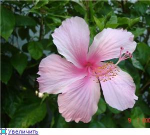 Орхидеи и прочая красота на о. Пхукет - Страница 2 Ee391d05c947t