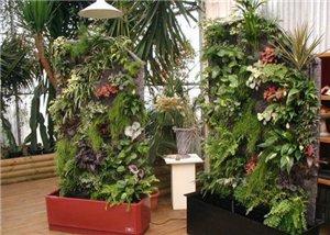 Вертикальное озеленение 8f995c2f4234