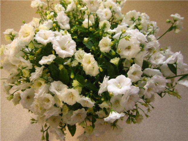 Мои цветулечки - Страница 20 4350ef64fb2d