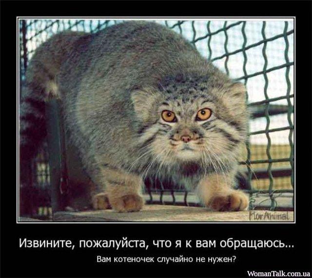Фотографии кошек 7b740e508412