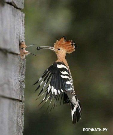 Фото птиц Fd1a0ebe2b9b