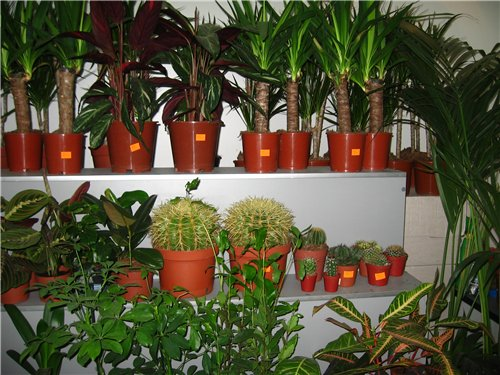 Ландшафт и приусадебное хозяйство - Весна 2009. - Страница 2 3e48966dd8af